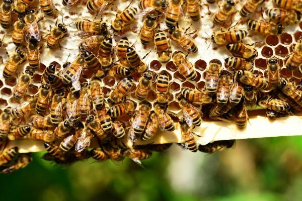 Агрофирма «Лебедянское» заплатит за гибель тысяч пчёл в Липецкой области