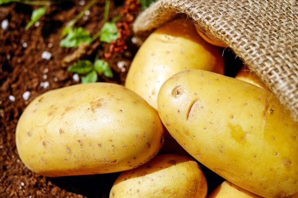 В Липецкой области разорилась «столетняя» картофельная компания