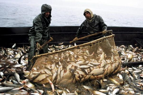тральщик разнорабочий на вылов рыбы понятно Содружество