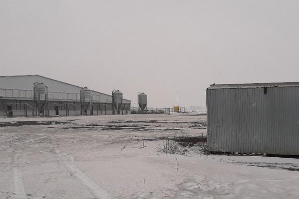 Жители Липецкой области снова пожаловались на «ароматы» от свинокомплексов и производство рядом с домами
