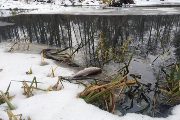 Премьеру Михаилу Мишустину пожаловались на массовую гибель рыбы в липецкой речке