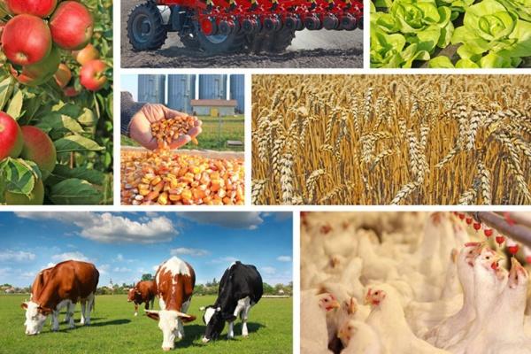 В развитие сельского хозяйства Липецкой области инвесторы вложат 23 млрд рублей