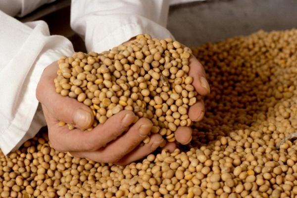 Воронежский бизнесмен готов вложить миллиарды в производство сои в ОЭЗ «Липецк»
