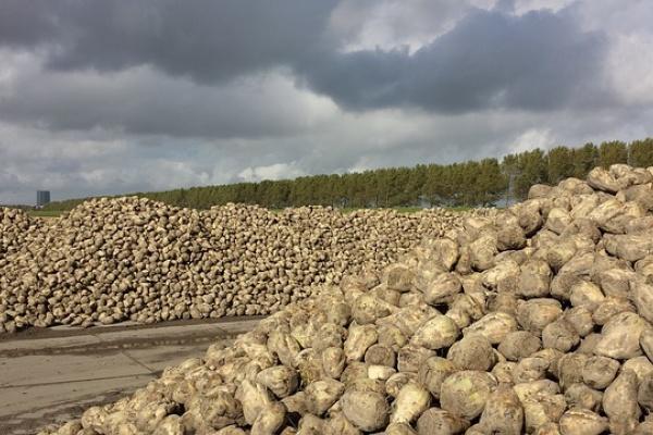 В гибели посевов сахарной свеклы липецкой компании «Трио» виновны ночные заморозки