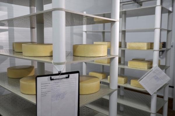 Сыродельный завод обошёлся липецкой «Кривец-птице» в 200 млн рублей
