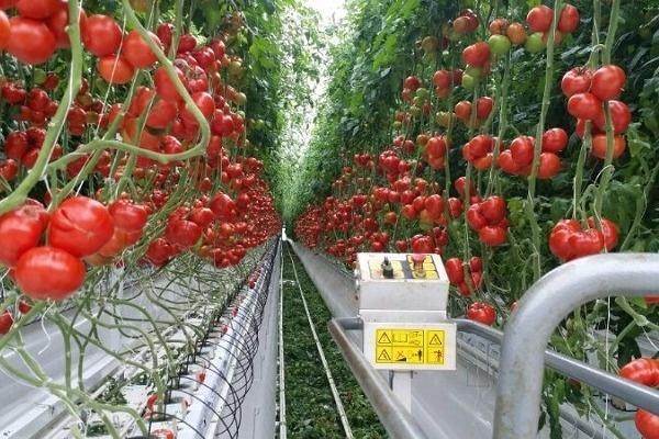 Компания «Елецкие овощи» планирует запустить тепличный комбинат к концу 2016 года