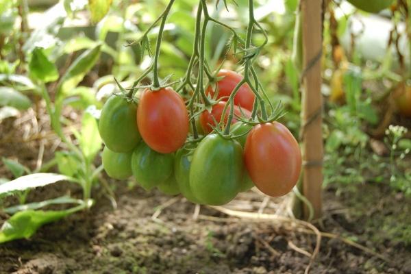 «Елецкие овощи» построят пятую очередь теплиц в Липецкой области