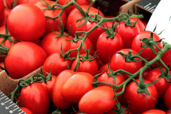 Турецкий предприниматель откроет под Липецком тепличный комплекс по выращиванию томатов до конца года
