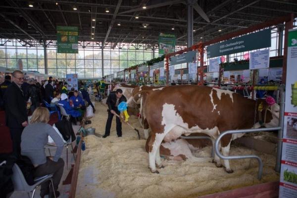 Липецкие товаропроизводители готовятся к агропромышленной выставке «Золотая осень – 2014»