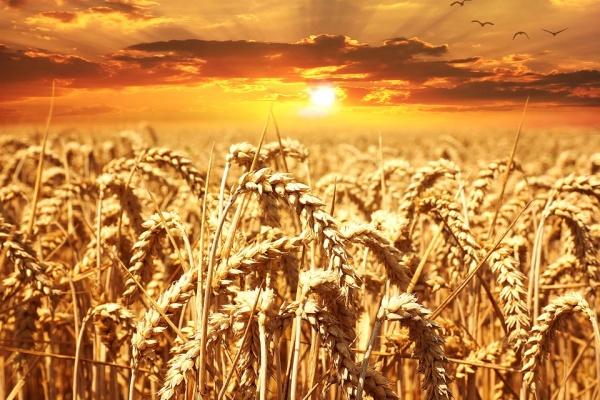 В Липецкой области заработают два семеноводческих завода общей стоимостью 1 млрд рублей