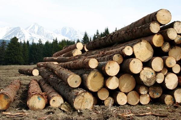 В Липецкой области возбудят уголовное дело за срубленный лес