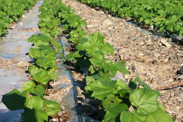 Липецкий производитель систем капельного орошения планирует запустить еще одну производственную линию
