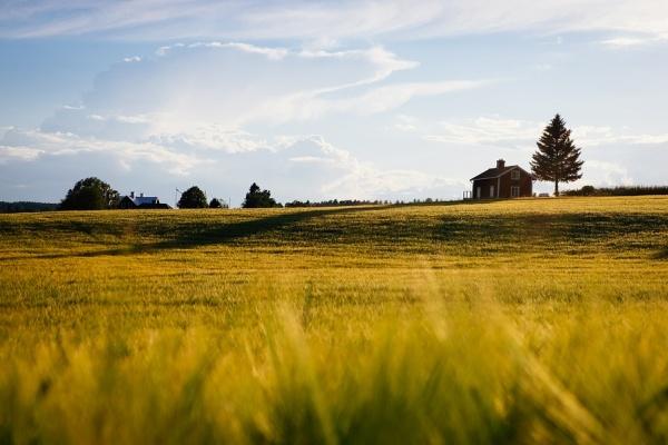 В Липецкой области бесплатные земельные участки получили более 80% многодетных семей