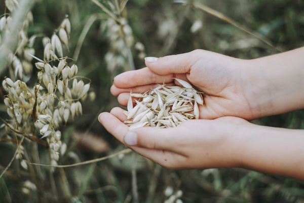 Экспорт липецкой сельхозпродукции подрос на 16%