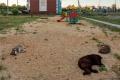 На ремонт липецких дворов в 2021 году обещают потратить более 23 млн рублей