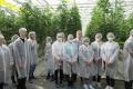 Крупнейший тепличный комбинат в Липецкой области запустил серию экскурсий на своё производство