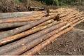 Липецкая общественность обеспокоена массовой вырубкой леса в посёлке Радужный