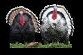 На птицефабрике «Задонская» Липецкой области законодательство нарушают с размахом