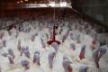 Жители липецкого села выступают против строительства второй очереди птицефабрики «Кривец-Птица»