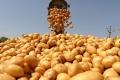 Липецкие власти поставили под сомнение строительство картофельного завода за 1,5 млрд рублей
