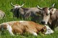 Липецкие животноводы с начала года произвели продукции на 51 млрд рублей