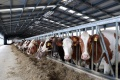 Липецкие сельхозпроизводители не дотянули объём продукции до стопроцентного показателя