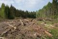 Уничтожение леса для липецкой компании «СвязьЭлектроСтрой» может обернуться уголовным делом