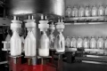 Липецкий СПК «Кудрявщинский» отложил реализацию проекта молокозавода из-за нехватки денег
