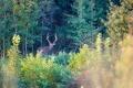 Липецкий природный парк «Олений» инвестировал в свое развитие около 100 млн рублей