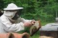 Липецким пасечникам могут выплатить до 3,5 тыс. рублей за погибшую от химикатов пчелосемью
