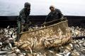 Росрыболовство планирует в этом году увеличить искусственное разведение рыбы на 10%