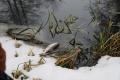 Чёрная вода в реке под Липецком и массовая гибель рыбы спровоцировала проверку Росприроднадзора