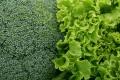 Тепличный комбинат «Елецкие овощи» инвестировал в производство салатов 1,3 млрд рублей