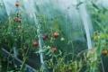 «Агро Альянс Липецк» планирует к весне 2018 года года запустить первую очередь тепличного комплекса за 3 млрд рублей