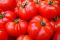 «Овощи Черноземья» построят вторую очередь тепличного комплекса за 3,4 млрд рублей