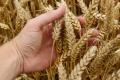 На форуме сельских депутатов черноземные аграрии рассказали премьер-министру Дмитрию Медведеву о своих надеждах на профильную госпрограмму