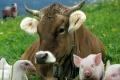 Липецкие власти хотят предложить фермерам перейти на альтернативное животноводство